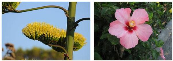 Balearic Islands plants